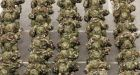 Defence forces: While recruitment has stepped up, it cannot keep up with departures. Photograph: Alan Betson