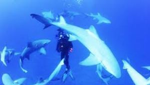 Sharkwater Extinction: We are killing around 150 million sharks a year