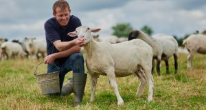 Animal welfare expertise at Ulster University takes all-Ireland approach