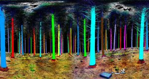 A commercial forest seen through the 'eyes' of a 3D laser scanning system developed by Treemetrics for a European Space Agency project