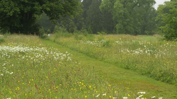 The wildflower meadows at Kilmacurragh Botanic Gardens in Co Wicklow.Photograph: Richard Johnston