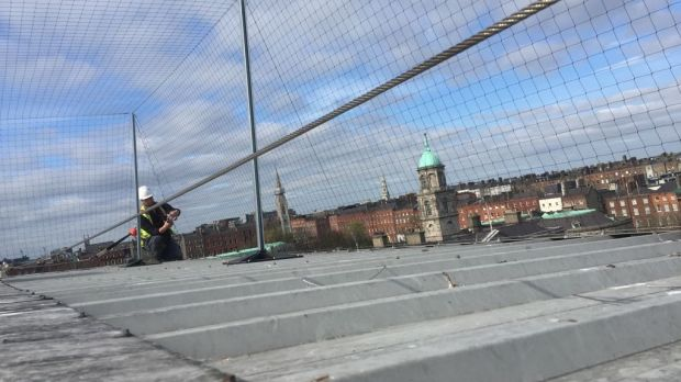 Gull proofing in Dublin. Photograph: Wildlife Management Services