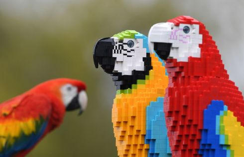 WHO'S A PRETTY PAIR? Inca, a scarlet macaw, checks out Polina and Pearl, life-size replicas of scarlet and blue-and-gold macaws made of 1,800 Lego bricks, at ZSL Whipsnade Zoo, Dunstable, Bedfordshire. Photograph: Joe Giddens/PA Wire