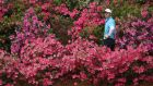 Rory McIlroy prepares to play a shot out of the flowers on the 13th hole during the third round of the Masters at Augusta National Golf Club in April 2018. Photograph:  Jamie Squire/Getty Images