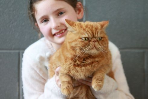 KEEPING UP APPEARANCES: Competitor Onslow with owner Abigail Geary from Tralee at the Supreme Cat Show.