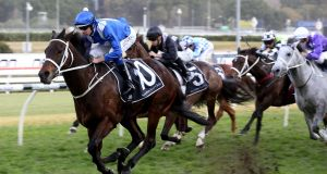 Winx's career is due to finish in the Queen Elizabeth Stakes at Royal  Randwick. If she wins, it will be a 33rd win in a row for Winx and a staggering 25th Group One success. Photograph:  Bob Barker/AFP/Getty Images