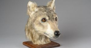 The dog was domesticated 4,500 years ago. Photograph: Santiago Arribas/Historic Environment Scotland