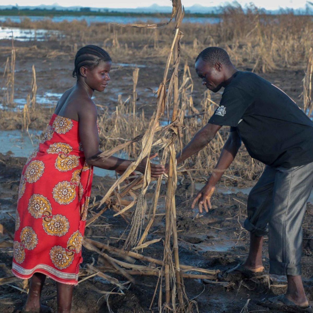 irishtimes.com - Kevin O'Sullivan - Concern and Accenture combine in Zambia and Malawi
