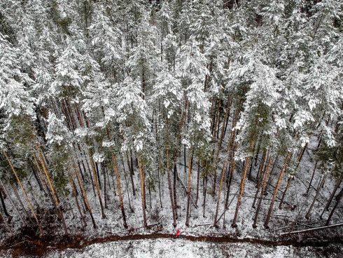 ANT-LIKE: A woman walks along a snow-covered forest edge outside Moscow. Photograph: Yuri Kadobnov/AFP/Getty Images