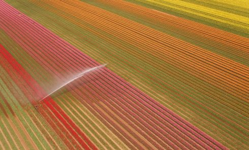 SPRING IS HERE: A field of variously coloured tulips comes into bloom near King's Lynn in Norfolk as Britain sees warmer spring weather arrive. Photograph: Joe Giddens/PA Wire