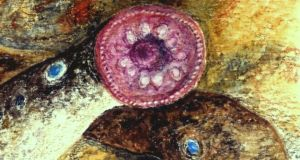 Lampreys are creatures of low public profile and, perhaps inevitably, some distaste.