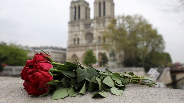 Roses laid near Notre Dame a day after a fire devastated the cathedral in central Paris. Photograph: Ludovic Marin/AFP/Getty