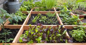 Square foot gardening by planting flowers, herbs and vegetables in wooden box on balcony. Photograph: Arterra/UIG via Getty Images