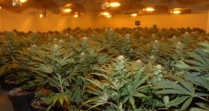 Gardaí discovered the cannabis plants in a building in Waterford Airport Business Park. File photograph: PA