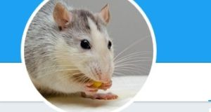 An Australian data scientist has started the popular @JustSaysInMice Twitter account.