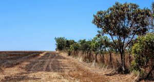 Land cleared for crops at the border of indigenous land in the Brazilian Cerrado. Photograph: Larissa Rodrigues