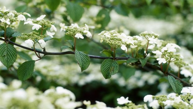 Eight Great Plants And Flowers For The May Garden