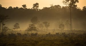In 2011 alone, the EU imported beef and livestock feed associated with more than 1,000sq km of Brazilian deforestation – equivalent to more than 300 football fields a day