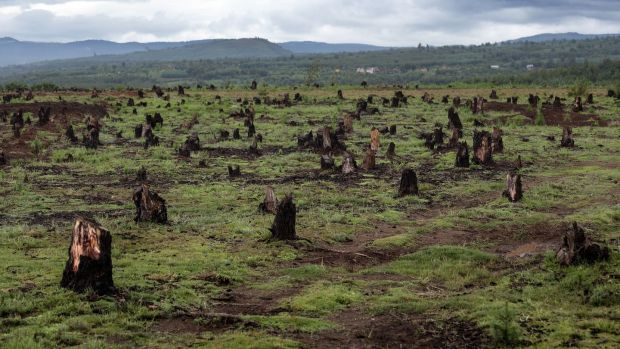 Stumps on the valley caused by deforestation and slash-and-burn type of agriculture in Madagascar. Photograph: Dudarev Mikhail/Shutterstock