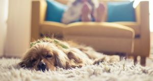 Maybe summer is a good time to get another dog . . . Photograph: iStock