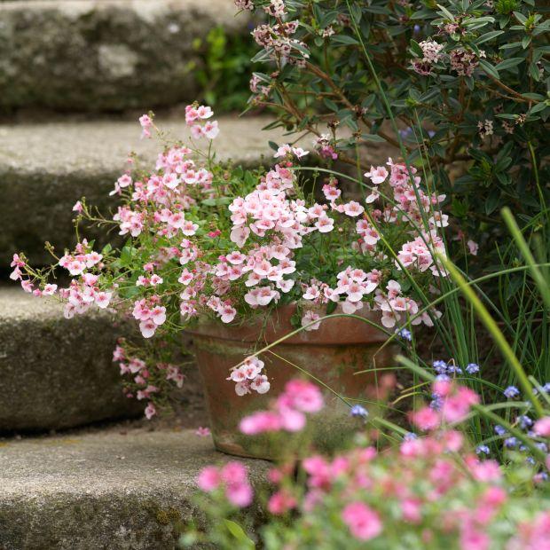 Pots flowering in Patthana Gardens in Co Wicklow. Photograph: Richard Johnston