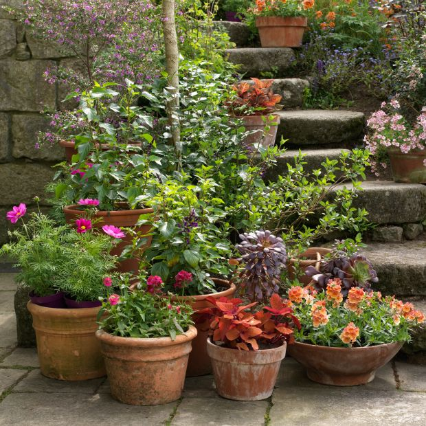 Container Planter: Container Gardening: Five Tips For Creating Brilliantly