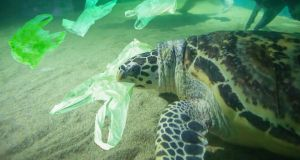 An agreement on tracking thousands of types of plastic waste emerged at the end of a two-week meeting of UN-backed conventions on plastic waste and toxic, hazardous chemicals.