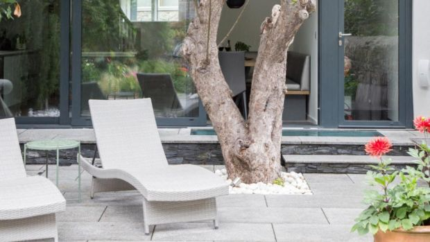 Build your terrace around a mature tree, like the apple here, in the back of a mews house project in Ranelagh by Phillippa Buckley of Studio 44.