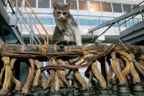 PURRFECT PILOT: A cat sits inside a flight test facility at the Antonov aircraft plant in Kiev, Ukraine. Photograph: Valentyn Ogirenko/Reuters