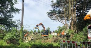 Some of the trees being removed on Grange Road, Clonsilla.