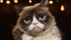 Grumpy Cat, the internet's most famous feline has died