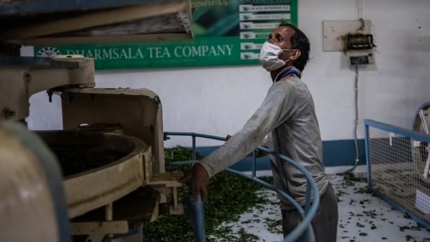 Anek Kumar, who commutes from his village to work every day, checks a machine used to crush tea leaves at the Mann Tea Estate, on the outskirts of Daramshala. Photograph: Rebecca Conway/The New York Times