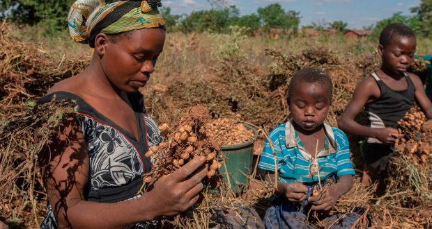Poverty Corruption And Fake News To The Fore As Malawi