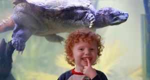 Three-year-old Conor Maverick with Swampy, the turtle, at their home in Monkstown Farm. Photograph: Nick Bradshaw