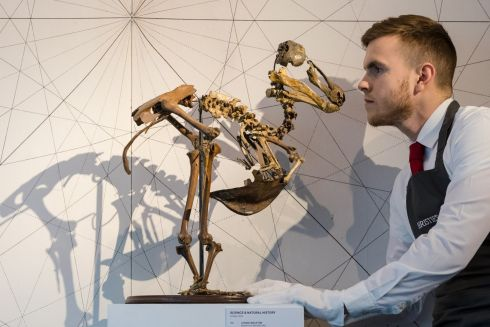 DEAD AS A... A gallery assistant beside a near-complete Dodo bird skeleton, from Mauritius, dated before 1690, at a photocall for Christie's Science and Natural History auction, to be held this week at Christie's auction house in London. Photograph: Vickie Flores/EPA