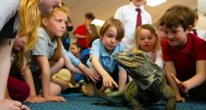 SHEER SCALES: Children meet a rhino iguana as part of the Bealtaine Living Earth Festival organised by Calmast WIT. Photograph: Patrick Browne