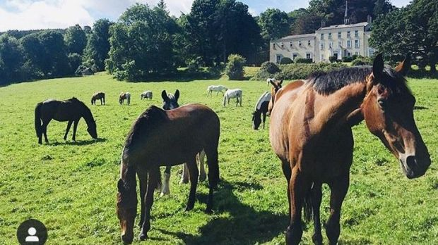 Horses on the Orlagh Estate where the Solstice event will take place in June