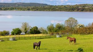 Pineridge Farm is a regency-style country home overlooking Lough Poulaphouca