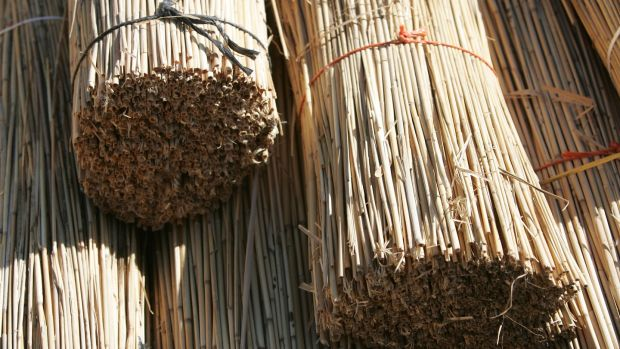 Bundled reeds ready for thatching a roof at the Fás thatching course in Portumna, Co Galway. Photograph: Frank Miller