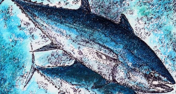 Catch a bluefin tuna and help conserve the species