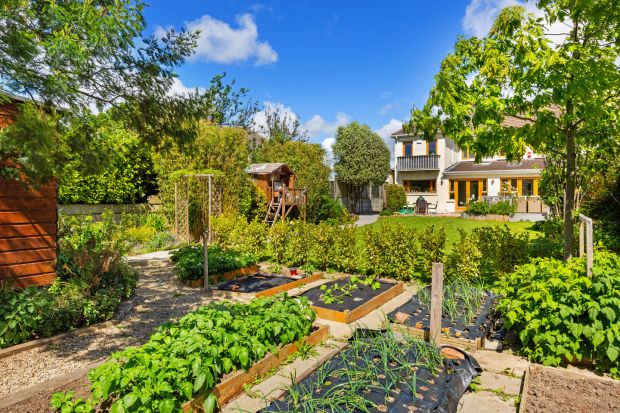 The neat and useful garden for homegrown food.