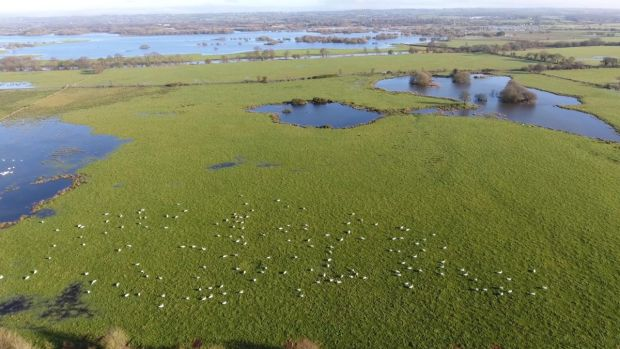 The Creagh, Lough Beg, one of Ireland's best sites for whooper swans, visible as white dots in the water meadows. Photograph courtesy of Chris Murphy