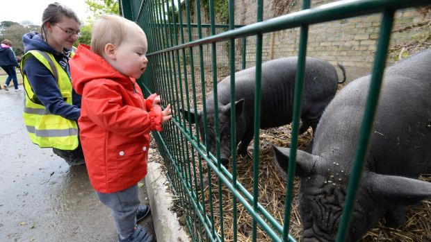 Con Faughnan from Raheney with Urban Farm volunteer Katrina Marsh, visiting the Vietnamese pot-bellied pigs at Dublin City Council's urban farm in St Anne's Park, Raheny, Dublin. Photograph: Alan Betson/The Irish Times