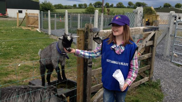 Feeding goats at the Burren Nature Sanctuary