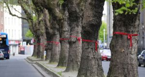 More than 3km of roads across Ballsbridge and Donnybrook in Dublin have been festooned with red ribbons to highlight the potential loss of trees as part of the BusConnects programme. Photograph Nick Bradshaw for The Irish Times