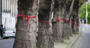 More than 3km of roads across Ballsbridge and Donnybrook in Dublin have been festooned with red ribbons to highlight the potential loss of trees as part of the BusConnects programme.  Photograph: Nick Bradshaw for The Irish Times