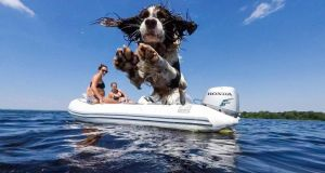 Summer Pix: last year's winning entry, of Bailey the springer spaniel jumping into Lough Derg,  was taken on a GoPro Hero5 by Louis Smith