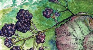 Mammals such as foxes and pine martens make an autumn feast of all the blackberries they can reach.