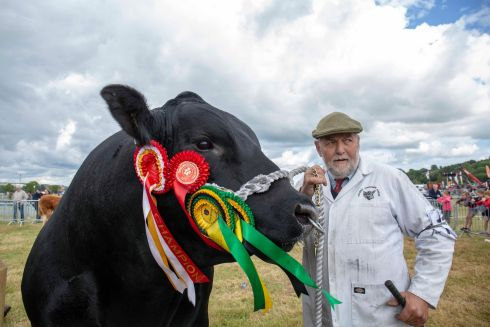 FEELING BULLISH: Albert de Cogan with prize animal at the Cork Summer Show, at the Munster Agricultural Showgrounds at Curraheen, Cork. More than 60,000 people were expected to visit the show over the weekend. Photograph: Clare Keogh