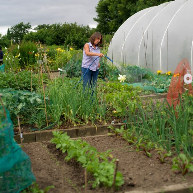 There's still plenty of time to sow lettuce, scallions, turnips, radish, annual spinach, kohlrabi, Florence fennel and Chinese cabbage. Photograph: Richard Johnston